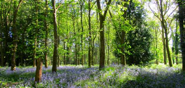 the forest bee image forest of dean small
