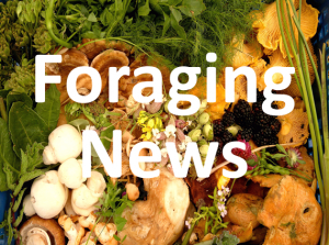 Foraging News